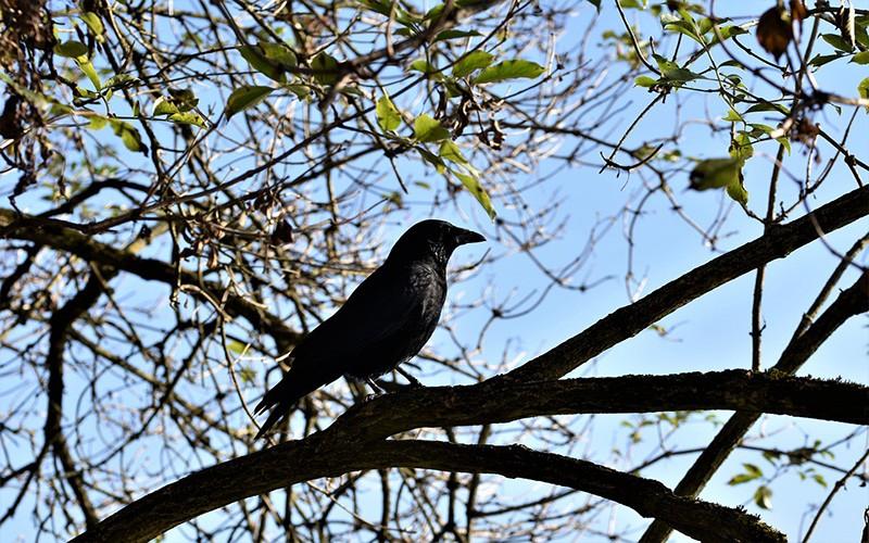 Ada di Ayat Al-Quran, Ternyata Inilah Burung Terpintar di Dunia Sejak Zaman Nabi Adam
