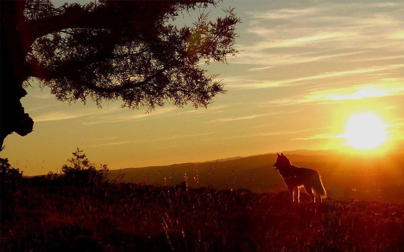 Kisah Penggembala Yahudi dan Serigala yang Bisa Berbicara