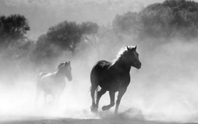 Kisah Nabi Sulaiman Rela Menyembelih 20 Ribu Kuda