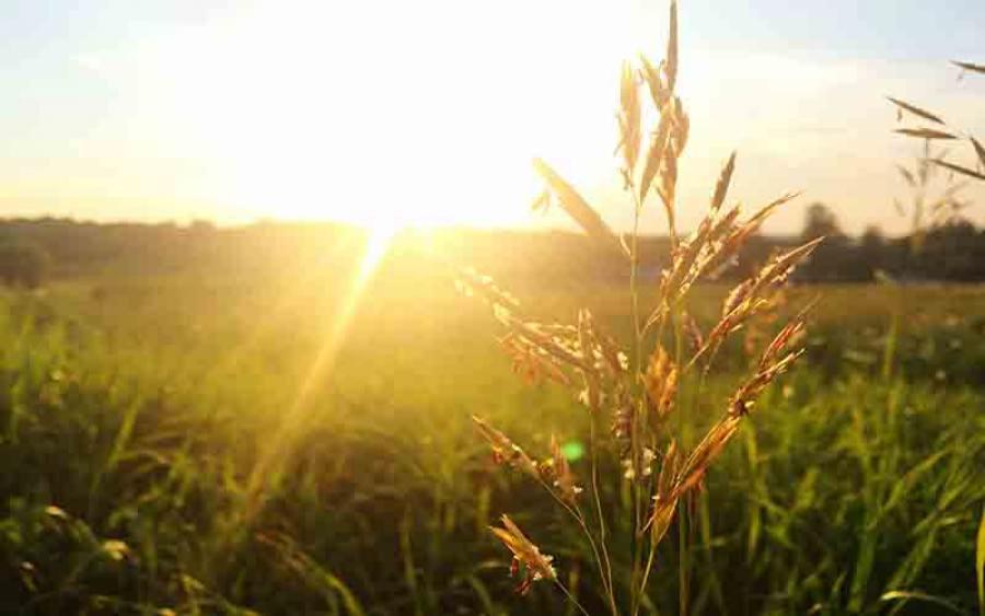 Tetangga Nabi Musa Di Surga, Kisah Bakti Si Anak Babi