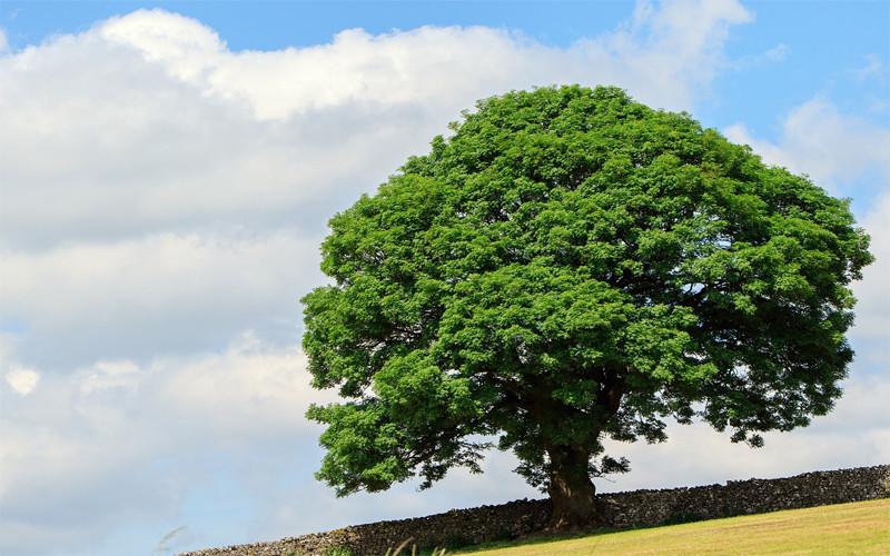 Mukjizat Rasulullah dan Kisah Pohon yang Berjalan