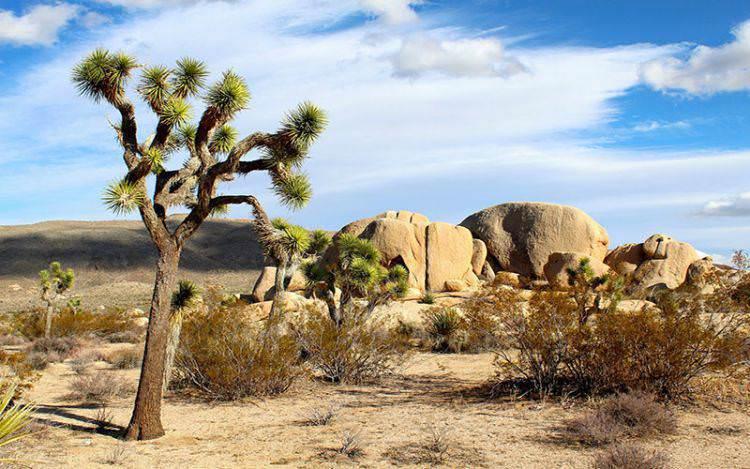 Kisah Tangisan Pohon yang Rindu Pada Rasulullah